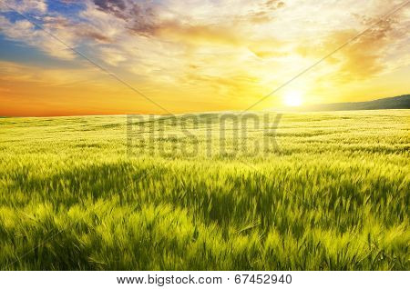 Meadow Of Wheat On Sunset.