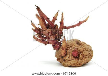 Brotos de batata