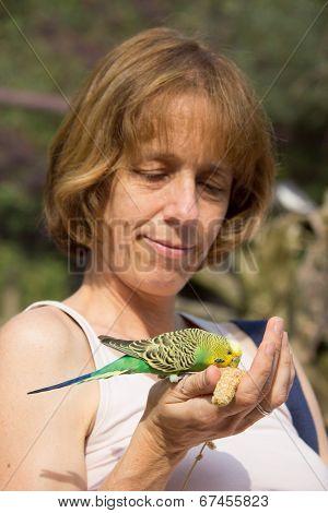 Woman feeding green budgerigar on hand