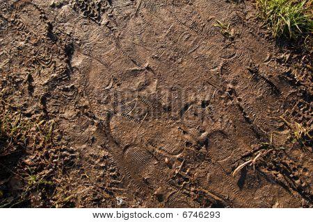 Footsteps In Mud