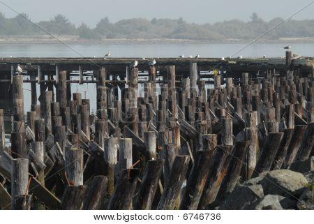 old dock pilings