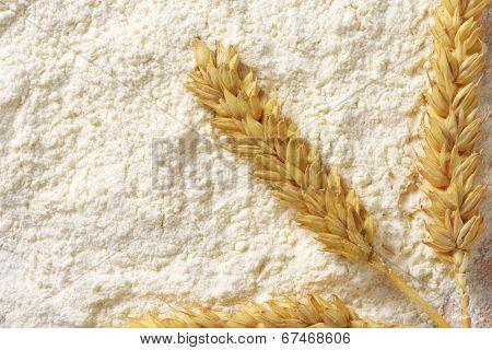 soft wheat flour with ripe wheat ear
