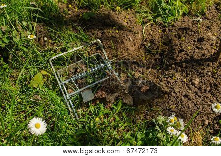 Mole Clutch Of The Iron Trap To Cave In Meadow