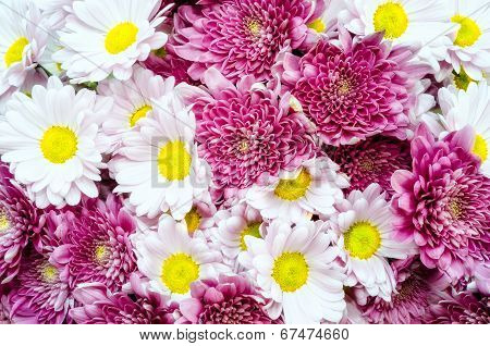 Bouquet Of Colorful Ox-eye-daisy And Chrysanthemum Flowers