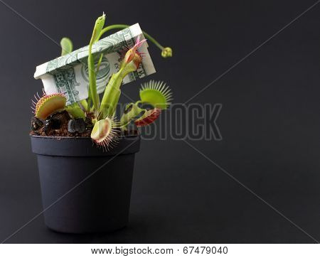 Fly Trap caught the cash