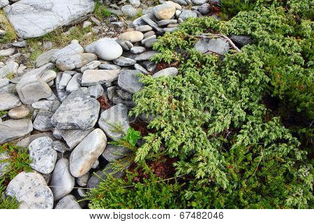 Stones And Moss In Lapland