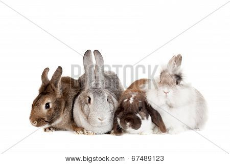 Group of different breeds rabbits