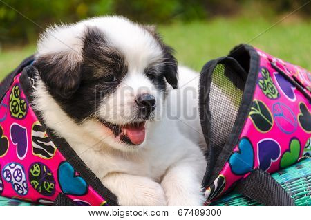 Puppy Sitting In Bag