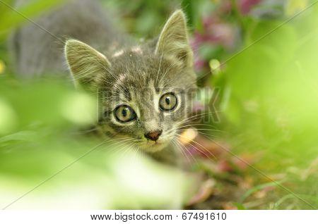 Kitten on the prowl.