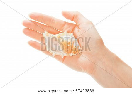 Big cockleshell on the female palm