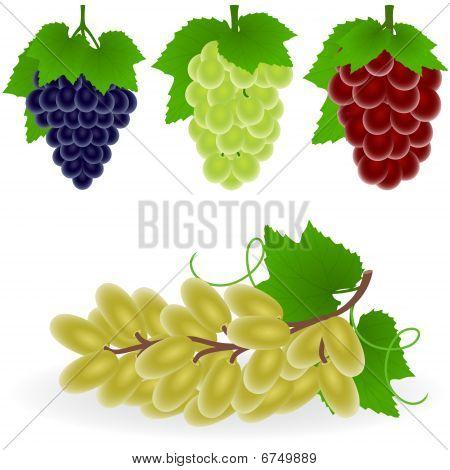 Icon Set Grape