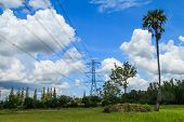 stock photo of sugar industry  - High Voltage Poles With Sugar Palm On Summer Season - JPG