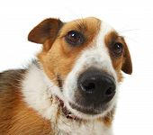 picture of stray dog  - Mongrel stray dog isolated on white background - JPG