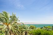 pic of golan-heights  - Date palms on the shore of Lake Kinneret or Galilee sea with clear blue sky - JPG