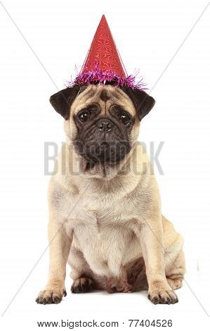 Cute Pug Dog With Hat On White Background