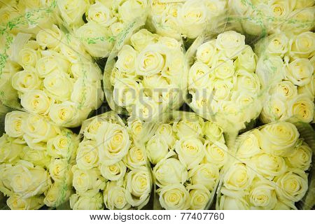 green roses at the flowers wholesale market