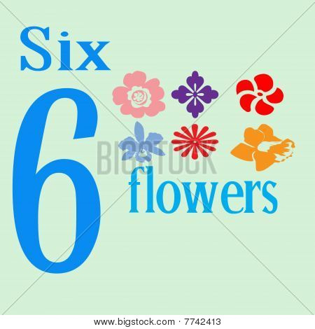 Six Pretty Flowers