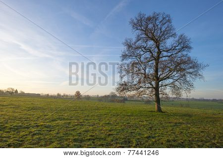 Tree in a hilly meadow at sunset in autumn