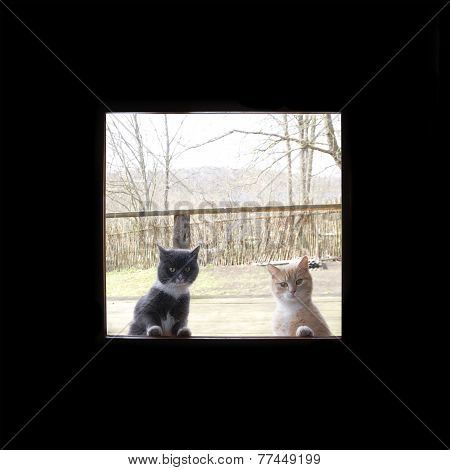 curious cats looking through the window