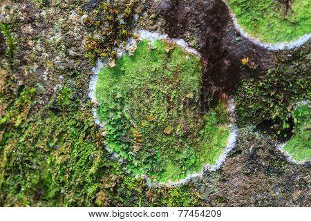 Texture Of Colored Lichen On Stone