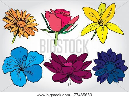 Set of Hand Drawn Flowers Colorful