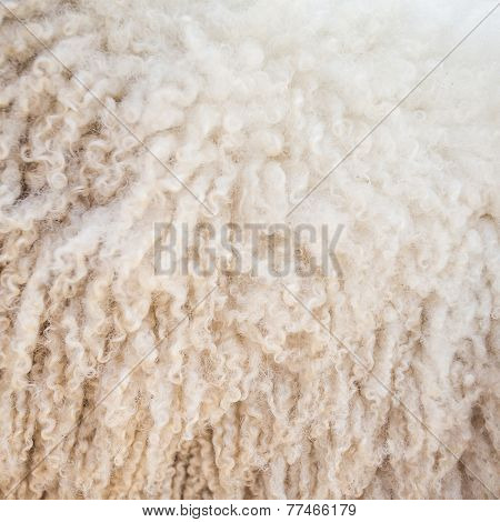 Felt sheep wool close-up background