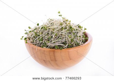 broccolis sprouts