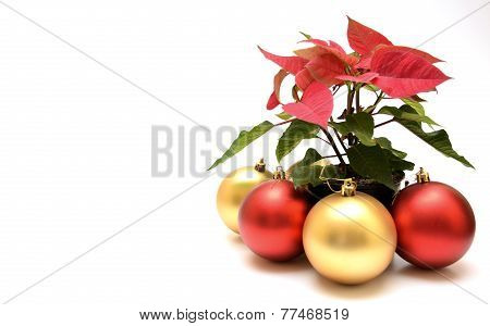 Snowglobe And Poinsettia