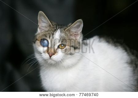 Cat With Deformed Eye