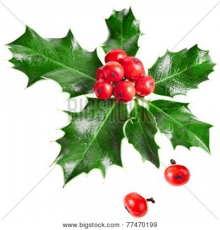 European holly ilex christmas decoration isolated on white background