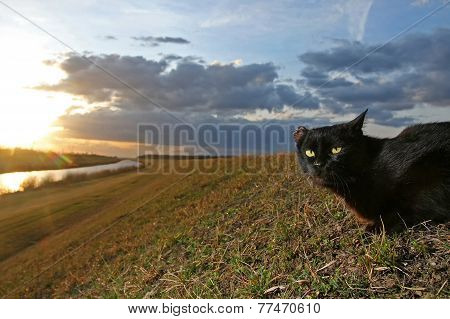 Black Cat Lying On Meadow At Sunset