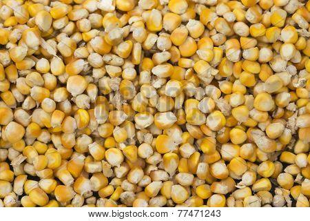 Corn Kernels In Close-up.