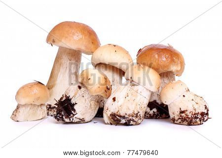 Wild mushrooms for food on white background