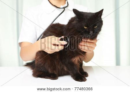 veterinarian examines a black cat