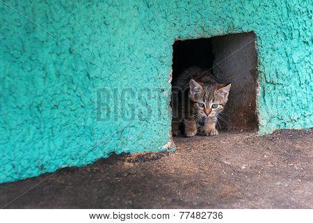 Homeless Kitten Cat Looking From A Cellar Hole.