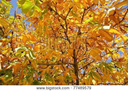 Green And Yellow Leaves In Autumn
