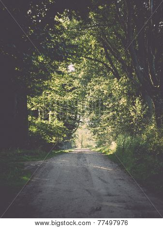Country Road Alley Lit By Evening Sun. Vintage.. Vintage.