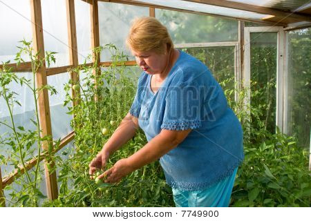 Woman Is Working Hard In A Greenhouse.
