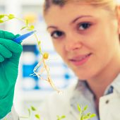 stock photo of modifier  - woman study of genetic modified GMO plants in the laboratory - JPG