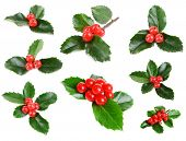 stock photo of mistletoe  - Leaves of mistletoe with berries collage - JPG