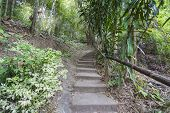 picture of step-up  - Forest pathway step up the hill in rural of thailandForrest pathway step up the hill in rural of thailand - JPG