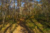 picture of hollow  - Hollow way in a sunny forest in autumn - JPG