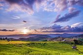 image of bong  - Golden rice paddy field and sunset Pa Bong Piang Chiang Mai Thailand - JPG