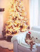 stock photo of lovable  - Lovable ginger cat wearing Santa Claus hat sleeping on chair near Christmas tree at home interior - JPG
