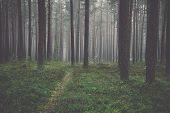 stock photo of morning  - Misty morning in the woods - JPG