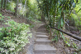 image of step-up  - Forest pathway step up the hill in rural of thailandForrest pathway step up the hill in rural of thailand - JPG