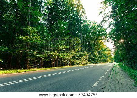 Asphalt Road Through The Green Forest