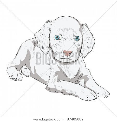 Little puppy on a white background. Illustration of a dog in the style of drawing