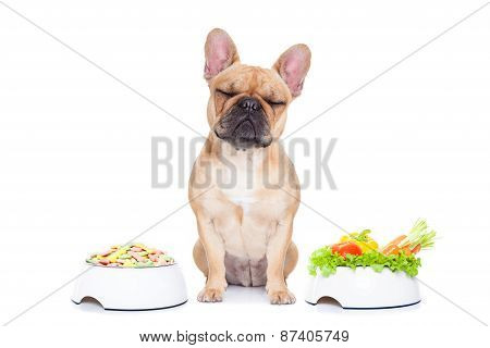 Dog With Food Choice