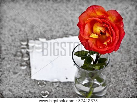 Red rose in a glass vase over sand background with white peace o